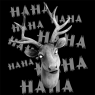 Stag - Hahaha